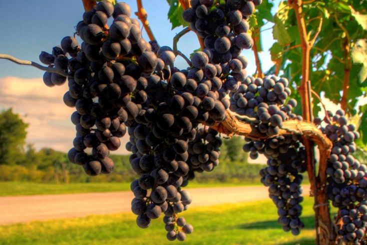 About Turkish Wines